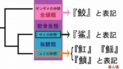 軟骨魚類の系統分類と中国語表記.jpg