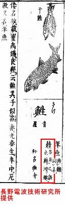 和漢三歳図会の鮭.jpg